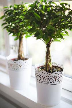 Stueplanter bringer liv i hjemmet